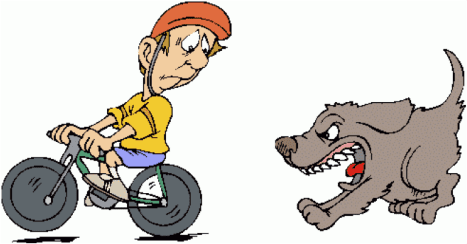 dog_aggainst_bicycle